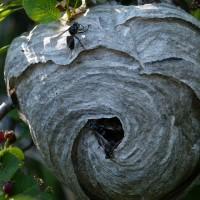 Vepsestikk og insektbitt